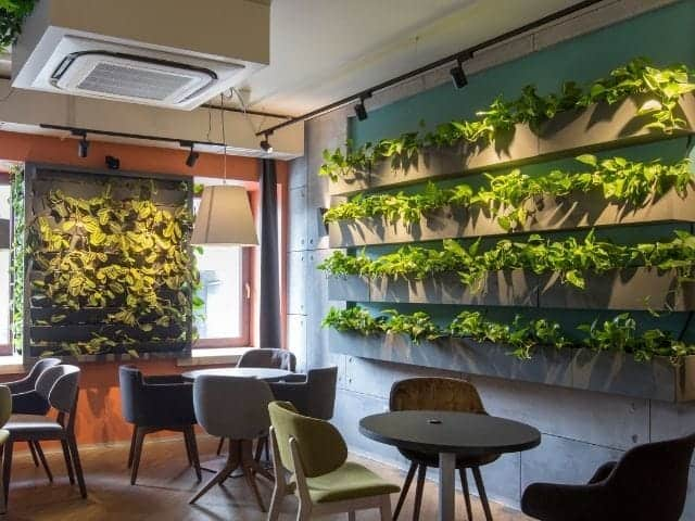 Common problems with living walls.