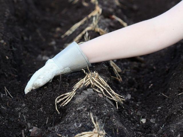 Can Soil Be Too Rich? Understanding Organic Matter Toxicity