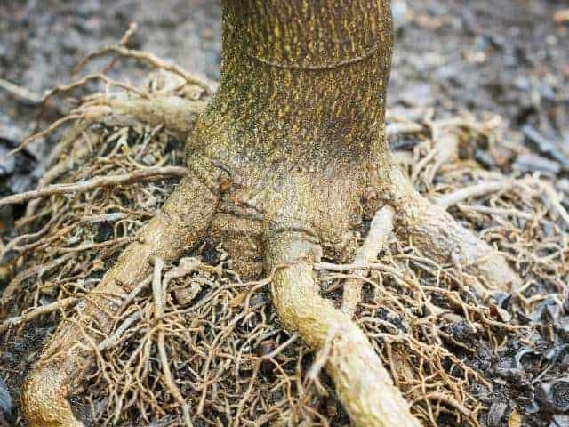 How Deep Do Fruit Tree Roots Grow?