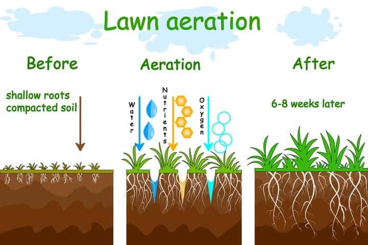 Lawn aeration diagram.
