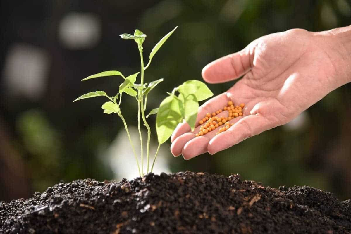 How to choose between organic and inorganic fertilizers.