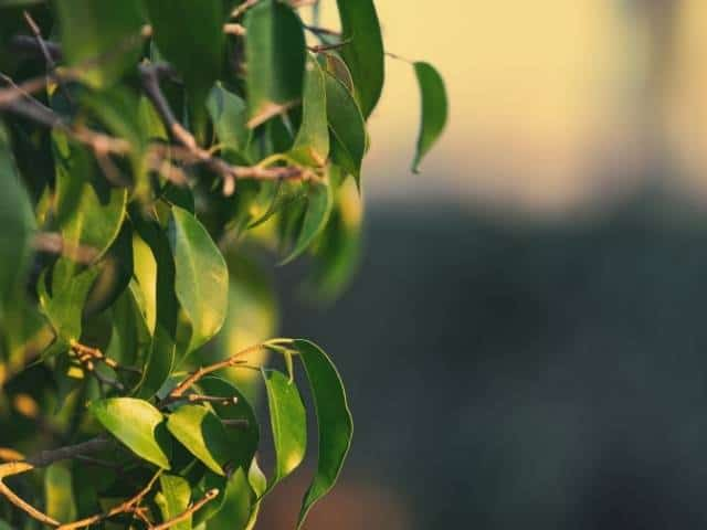 Lemon Tree Won't Grow Fruit? Here's Why and What To Do