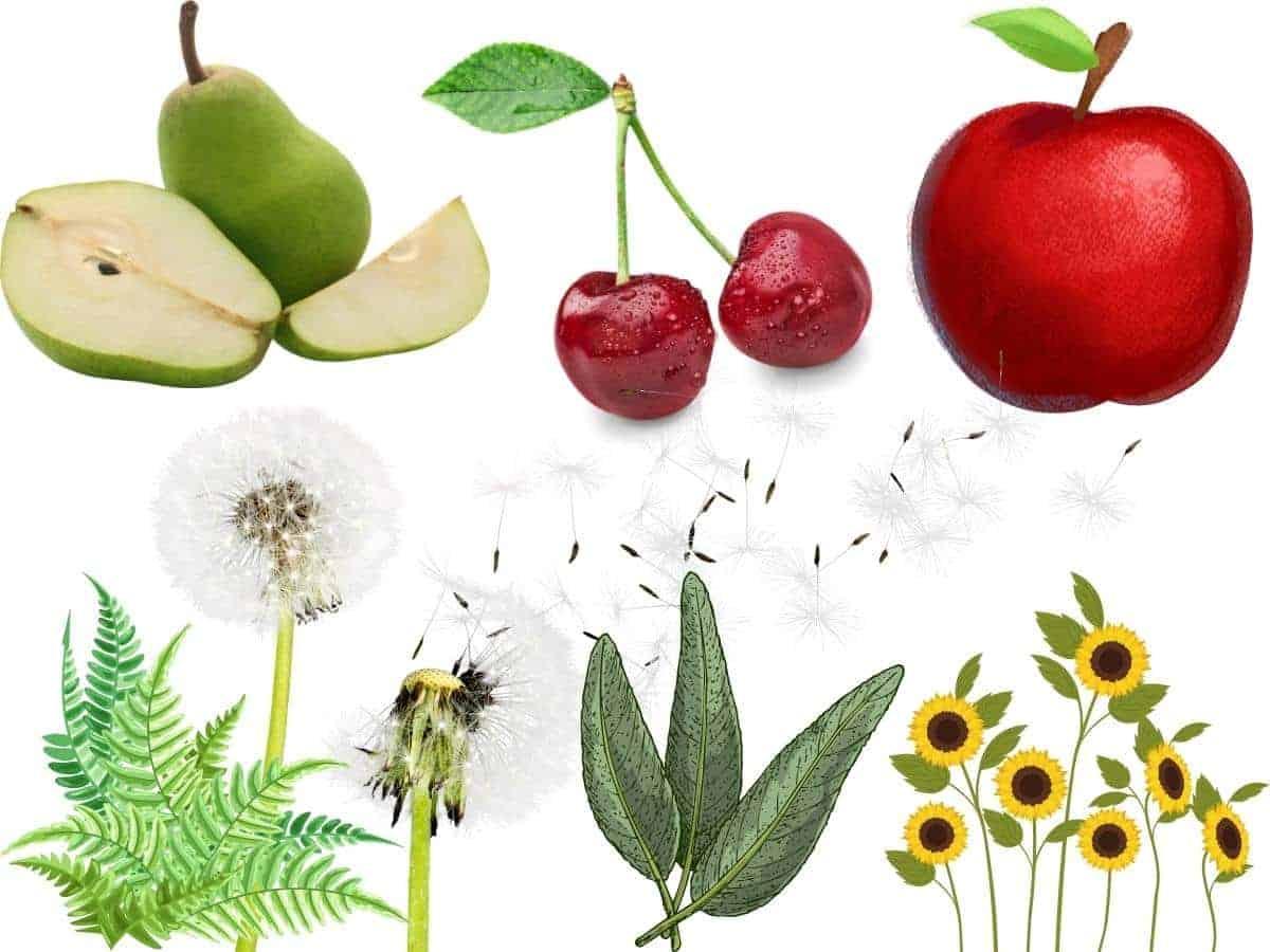 Fruit tree companion planting guide.