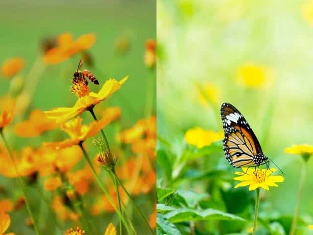 Plants that attract butterflies and bees can help to increase pollination of lemon trees.