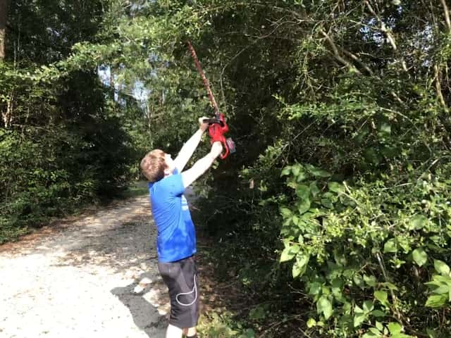 Trimming yaupon overhang with Powerworks 40v Hedge Trimmer.