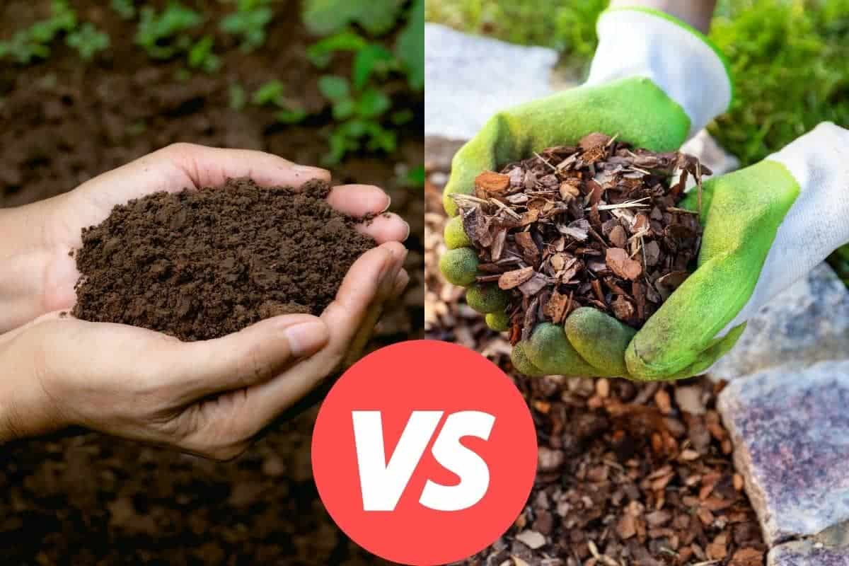 Compost vs Mulch - Which to use.