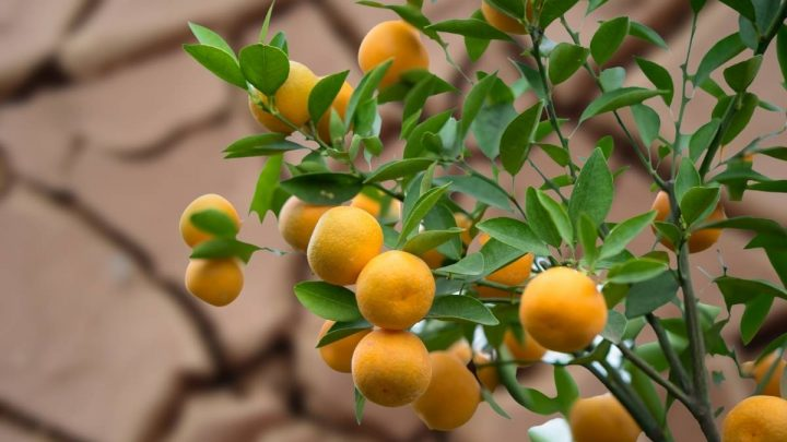 Growing Fruit Trees In Clay Soil – A Beginner's Guide