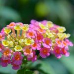 Annuals and Perennials that bloom all year.