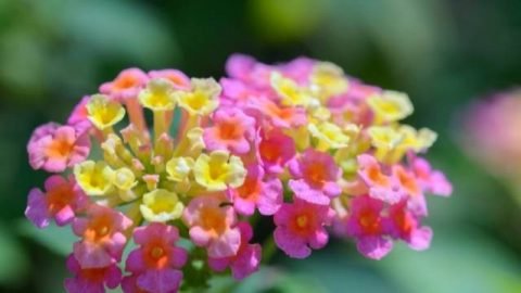 20 Flowers That Bloom All Year (Annual & Perennial)