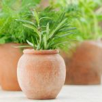 List of herbs that grow well together.