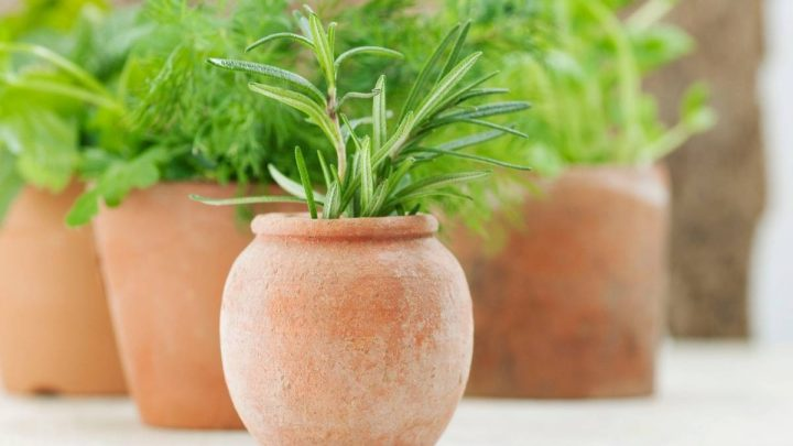 Herbs That Grow Well Together